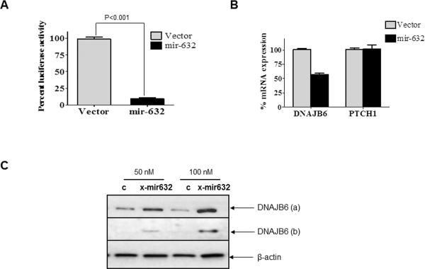 miR-632 targets DNAJB6 for degradation (A) pMIR-REPORT-DNAJB6 (containing putative binding site of miR-632 from the ORF of DNAJB6) was co-transfected with miR-632 expression vector, miR-632-pIRES2EGFP or empty vector control. The assay was performed in triplicate and the experiment was performed twice. The luciferase activity readings were normalized with activity from a co-transfected β-gal expressing control. The error bars represent standard error of mean (SEM) (B) Levels of DNAJB6 and PTCH1 transcript were evaluated from MCF10A cells treated with miR-632-pIRES2EGFP or empty vector control. GAPDH was used as endorse control. The error bars represent standard error of mean (SEM). The reactions were performed in triplicate and the experiment was performed three times. (C) MDA-MB-231 cells were treated with X-miR-632 or control (50 and 100 nM). Total protein extract (30μg) was resolved using SDS-PAGE and subjected to western blot analysis for DNAJB6 levels. β-actin levels were determined as loading control.