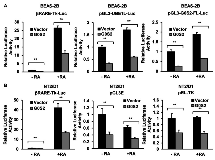 G0S2 inhibitory effects of G0S2 in retinoid differentiation or growth responsive cell contexts. (A) Transient transfection of G0S2 inhibited luciferase activity of retinoid responsive reporter plasmids βRARE-Tk-Luc, pGL3-UBE1L-Luc or pGL3-G0S2-FL-Luc in BEAS-2B cells, both in the presence and absence of RA (1 μ M) treatment. (B) Individual transient transfections in NT2/D1 cells (+/− RA-treatment, 1 μ M) of G0S2 inhibited activity of the reporter plasmid βRARE-Tk-Luc, which contained a retinoid responsive element, as well as the reporter plasmids pGL3E (firefly) and pRL-TK (renilla) that did not contain this responsive element. Representative results are shown from three independent experiments (each performed in triplicate) with error bars representing standard deviations. ** P