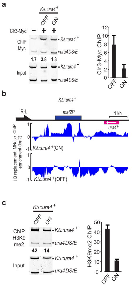 Clr3–dependent suppression of histone turnover correlates with epigenetic stability of heterochromatin ( a ) ChIP analysis of Clr3 localization of at the silent mat region. Strains expressing Myc tagged Clr3 in K Δ ∷ura4 + ura4–on or ura4–off state were used to perform ChIP. ChIP DNA was analyzed by semi–quantitative competitive PCR using primers that amplify both full–length K Δ ∷ura4 + and endogenous mini– ura4 ( ura4DSE ) as internal control. The relative enrichments were determined by calculating the ratio of the band intensities of [ChIP K Δ ∷ura4 + ÷ ChIP ura4DSE ] ÷ [Input K Δ ∷ura4 + ÷ Input ura4DSE ]. Results were confirmed by quantitative real–time PCR (qPCR). Relative enrichment of K Δ ∷ura4 + was normalized against untagged negative control and the mean enrichment is presented. Error bars represent standard error of the mean calculated from 3 independent biological replicates (n=3) ( b ) H3 replacement was measured in K Δ ∷ura4 + ura4–on or ura4–off cells. The endogenous ura4 + was deleted in the strains used. ( c ) ChIP analysis of H3K9me2 levels at K Δ ∷ura4 + ura4–on cells. Experiments were performed with the same strains used in a . H3K9me levels were confirmed by qPCR and the mean enrichment is presented. Error bars represent standard error of the mean calculated from 4 independent biological replicates (n=4).