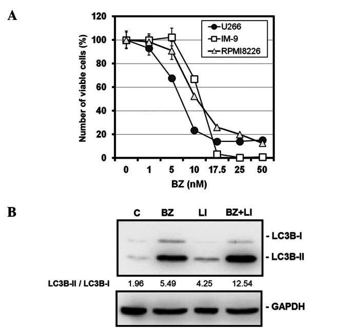 Cell growth inhibition and autophagy induction in MM cell lines after treatment with BZ. (A) U266, IM-9 and RPMI8226 cells were treated with BZ at various concentrations for 48 h. The number of viable cells was assessed by CellTiter Blue as described in Materials and methods. (B) U266 cells were cultured with or without BZ (10 nM) in the presence or absence of lysosomal inhibitors (LI), E-64d (10 μ g/ml) and pepstatin A (10 μ g/ml) for 48 h. Cellular proteins were separated by 15% SDS-PAGE and immunoblotted with anti-LC3B Ab. Immunoblotting with anti-GAPDH mAb was performed as an internal control. The numbers indicate the ratio of LC3B-II/LC3B-I as determined by densitometry.