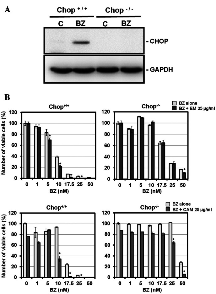 Cell growth inhibition of the CHOP −/− MEF cell line and the wild-type MEF cell line after treatment with BZ and EM or CAM. (A) After treatment with BZ (10 nM) for 24 h, cellular proteins were separated by 11.25% SDS-PAGE and immunoblotted with anti-CHOP mAb. (B) The CHOP −/− MEF cell line and the wild-type MEF cell line were cultured with BZ at various concentrations in the presence of absence of EM or CAM (at 25 μ g/ml) for 48 h. The number of viable cells was assessed by CellTiter Blue as described in Materials and methods. p