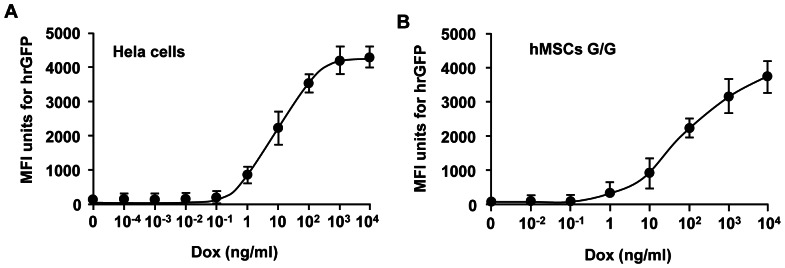 A dose-dependent expression of humanized recombinant green fluorescent protein (hrGFP) gene. HeLa cells and human bone marrow-derived mesenchymal stem cells (hMSCs) were co-transduced with binary Tet-On lentivirus vectors harboring both the human glial cell line-derived neurotrophic factor (hGDNF) and hrGFP genes. The virus vector-containing medium was replaced with the medium in the presence (On) or absence (Off) of doxycycline (Dox) 8 hour after transduction. Serial doses of Dox ranging from 10 −4 – 10 4 ng/ml were tested to induce transgene expression. The cells were harvested and mean fluorescence intensity (MFI) units for hrGFP were examined by flow cytometry (FCM) 4 days after Dox treatment. The expression of hrGFP transgene in HeLa cells (A) and hMSCs (B) was regulated in a clear Dox dose-dependent manner.