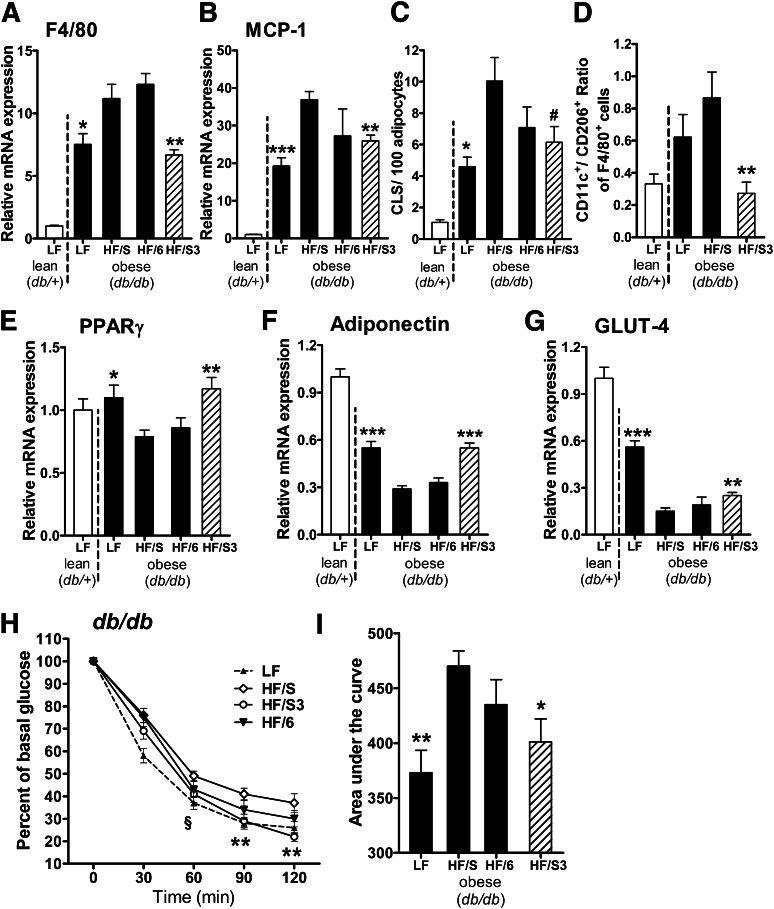 Dietary n-3 PUFA treatment attenuates adipose tissue inflammation and improves insulin sensitivity. Lean ( db/+) mice were fed an LF diet and obese ( db/db ) animals were fed an LF diet or three different isocaloric HF diets: 1 ) HF/S diet rich in saturated/monounsaturated fatty acids; 2 ) HF/6 diet rich in n-6 PUFA; and 3 ) HF/S3 (HF/S diet supplemented with n-3 PUFA) for 6 weeks. Gonadal adipose tissue expression of the genes for macrophage marker F4/80 ( Emr1 ) ( A ) and MCP-1 ( Ccl2 ) ( B ) after dietary treatment was analyzed ( n = 10 animals per group). ( C ) CLS formation, a hallmark of obesity-associated inflammation, was assessed by MAC-2 staining, and the number of CLS in gonadal adipose tissue was calculated per 100 adipocytes ( n = 5 animals per group). ( D ) Flow cytometry analysis of the CD11c + CD206 − -to-CD11c − CD206 + ratio of adipose tissue macrophages (F4/80 + cells) obtained from stromal vascular fractions of the db/+ LF control and db/db animals after dietary treatment with indicated diets ( n = 8 animals per group). Expression of the genes for PPARγ ( Pparg ) ( E ), adiponectin ( Adipoq ) ( F ), and GLUT-4 ( Slc2a4 ) ( G ) after dietary treatment in gonadal adipose tissue ( n = 10 animals per group). ( H and I ) Insulin sensitivity was determined in db/db mice after LF control, HF/S, HF/6, or HF/S3 diet. Blood glucose was measured before and 30, 60, 90, and 120 min after intraperitoneal injection of insulin (2.0 units/kg body weight; n = 7–9 animals per group), and the area under the curve was calculated ( n = 7–9 animals per group). For statistical analysis, db/db mice were compared with those fed the HF/S diet. All data are mean ± SEM. # P = 0.067; * P