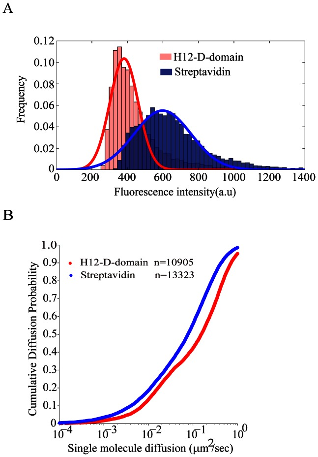 The IgG surrogate antigens tethered by H12-D-domain show more uniform distribution with better lateral mobility than the ones tethered by streptavidin. (A) Shown is the distribution of fluorescence intensities (FI) of 10905 IgG surrogate antigen molecules tethered by H12-D-domain (red color) versus 13323 IgG surrogate antigen molecule tethered by streptavidin (blue color) on PLB membranes with a Gaussian fit (red or blue colored curve respectively) to the histogram plot. (B) Cumulative diffusion probability plot of all the calculated instant diffusion coefficients of 10905 IgG surrogate antigen molecules tethered by H12-D-domain (red color) versus 13323 IgG surrogate antigen molecule tethered by streptavidin (blue color) on PLB membranes.