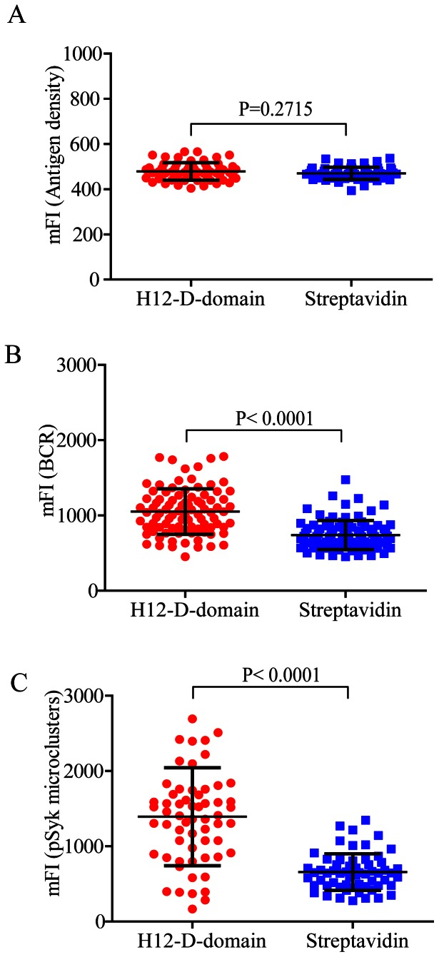 IgG surrogate antigens tethered by H12-D-domain enhance the accumulation of BCR and pSyk into B cell immunological synapse than the ones tethered by streptavidin. (A) Statistical quantification for the mean fluorescence intensity (mFI) of biotin and Alexa 568-conjugated goat IgG anti human IgM surrogate antigens tethered on the surface of PLB membranes by either H12-D-domain (red color) or streptavidin (blue color). Each dot represents a single measurement for the mFI of the tethered IgG surrogate antigens by Image J software. Bars represent means ± SD. Two-tailed t tests were performed for statistical comparisons. (B) Statistical quantification for the accumulation of human IgM-BCRs into the immunological synapse as measured by the mFI of BCR within the immunological synapse from Ramos human B cells that were placed on PLB membranes presenting the same amount of IgG surrogate antigen as shown in A that were tethered by either H12-D-domain or streptavidin. Each dot represents a single measurement for the mFI of IgM-BCRs by Image J software. Bars represent means ± SD. Two-tailed t tests were performed for statistical comparisons. (C) Statistical quantification for the accumulation of pSyk signaling molecules into the immunological synapse as measured by the mFI of BCR within the immunological synapse from Ramos human B cells that were placed on PLB membranes presenting the same amount of IgG surrogate antigen as shown in A that were tethered by either H12-D-domain or streptavidin. Each dot represents a single measurement for the mFI of pSyk by Image J software. Bars represent means ± SD. Two-tailed t tests were performed for statistical comparisons.