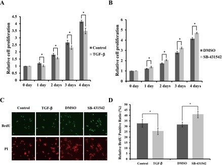 Effects of TGF-β signaling on cell proliferation of HIT-T15 cells. ( A ) HIT-T15 cells were cultured in 10% FBS RPMI 1640 medium with or without 5 ng/ml TGF-β1 for 1 day, 2 days, 3 days and 4 days (6 independent repeats of experiments). ( B ) HIT-T15 cells were cultured in 10% FBS RPMI 1640 medium containing DMSO or 2 µM SB-431542 for 1 day, 2 days, 3 days and 4 days. Six repeats of the experiment were done independently. The data are mean±SD (error bars) of a representative experiment. * p