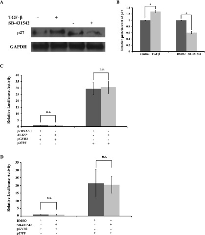 Effects of TGF-β signaling on expression of p27. (A) HIT-T15 cells were treated with or without 5 ng/ml TGF-β1, and/or with DMSO or 2 µM SB-431542, for 2 days. Western blotting of the whole cell extracts for p27, and GAPDH, which was used as a control. (B) Results are displayed as the relative protein level of p27. Six repeats of the Western blotting were done independently. The data are mean±SD (error bars) of a representative experiment. * p