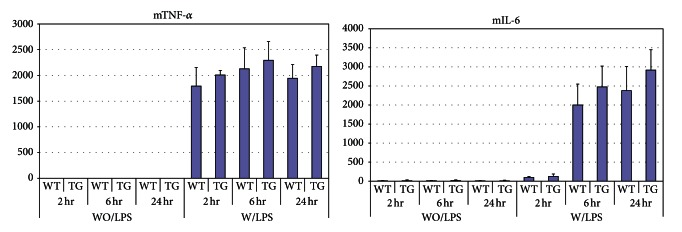 Peritoneal macrophages from WT and NAG -1 Tg / Lox mice show no difference in the production of inflammatory cytokines in response to LPS. Peritoneal macrophages were isolated from WT and NAG -1 Tg / Lox mice after 3 days of thioglycollate injection and plated on 60 mm dishes. After 24 hrs, cells were treated with LPS (1 ng/mL) and culture media were collected at the indicated time points. The levels of TNF- α and IL-6 from 3 dishes for each treatment were measured, in duplicate, using cytokine-specific ELISAs (R D). The mean ± standard deviation is reported.