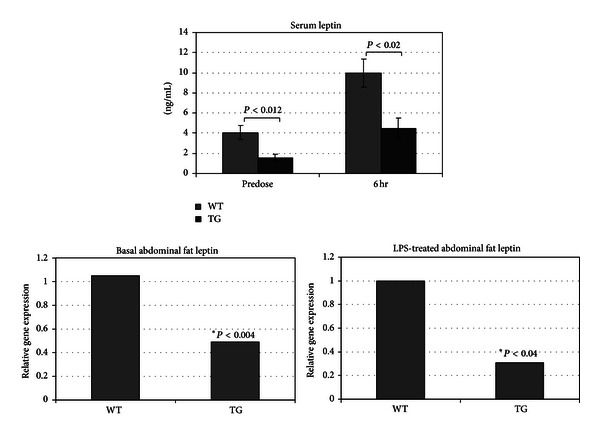 NA G -1 Tg / Lox mice have lower basal and LPS-induced serum leptin concentrations and abdominal fat leptin expression than WT littermates. The serum collected from the terminal bleeds ( Figure 5 ) was analyzed for leptin using a cytokine-specific ELISA. RNA was isolated from the isolated abdominal fat tissue, which was analyzed for relative expression of mouse leptin mRNA using RT-PCR.