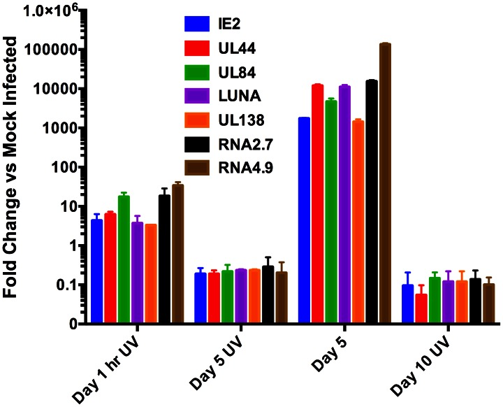 UV inactivation of virus abrogates accumulation of IE2 and latency associated transcripts in CD14 (+) monocytes. CD14 (+) monocytes were infected with either wt FIX BAC virus or UV inactivated virus. Total cellular RNA was harvested at 1 hr, 5 and 10 days post infection and qPCR was performed to detect transcripts IE2, UL44, UL84, LUNA, UL138, lncRNA 2.7 and lncRNA4.9. Transcript fold increase was determined using mock infected as reference. 3 separate experiments were preformed and error bars are the SD of the mean.