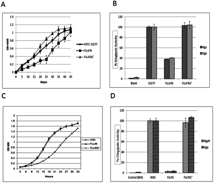 Comparison of growth and gingipain activities of wild-type, vimF mutant and complemented strains of W83 and ATCC 33277. Growth rate of P. gingivalis ATCC 33277 ( A ) and W83 ( C ) were compared with their respective vimF -defective isogenic mutants (FLL476 and FLL95 ) and complemented strains (FLL476C' and FLL95C'). The data shown is an average of three independent replicates. Error bars represent the SD. Gingipain activity of W83 ( D ) and ATCC 33277 ( B ) were compared with respective mutants and complemented strains. The activities were normalized to W83 and ATCC 33277 being 100% and the mutants reported as a percentage thereof. Error bars represent SD.