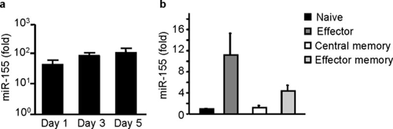 miR-155 is expressed in CD8 + T cells. (a) miR-155 is highly upregulated with in vitro activation of CD8 + T cells. Sorted splenic CD8 + T cells from wild-type C57BL/6 mice were stimulated in vitro with anti-CD3, anti-CD28 antibodies for 1, 3 and 5 days and miR-155 expression was quantified by RT-PCR. Graph shows fold increase of miR-155 expression over sorted unstimulated CD8 + T cells. Bars represent mean and standard errors of 5 animals per group tested in 3 independent experiments. ( b) miR-155 is expressed in vivo in primary effector and effector memory CD8 + T cells. Donor day 10 lung effector CD44 + CD62L- CD8 + T cells and donor day 60 splenic effector memory CD44 + CD62L - or central memory CD44 + CD62L + CD8 + T cells were sorted from congenic animals that had received OT-I adoptive transfers and been infected with WSN-OVA influenza virus. Naive CD44-CD62L + CD8 + T cells were sorted from spleens of naive OT-I mice. MiR-155 expression was quantified by RT-PCR. Graph depicts fold increase of miR-155 over naive CD8 + T cells. Bars represent mean and SEM from 3-5 mice/groups and 2 independent experiments. All values were normalized to 18S rRNA expression.