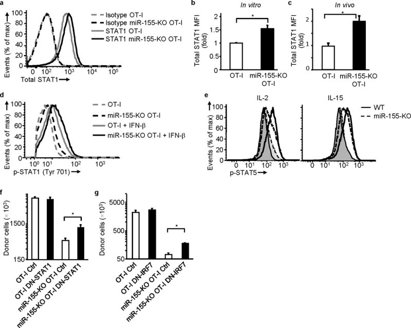 miR-155 regulates STAT1 expression and Type I IFN signaling contributes to the proliferative defect of miR-155 deficiency. (a) and (b) Increased total STAT1 in miR-155-KO OT-I cells. (a) Representative histogram showing STAT1 expression and (b) fold increase of STAT1 MFI in vitro in miR-155-KO OT-I cells over OT-I cells. Cells activated with OVA(257–264)-pulsed irradiated splenocytes for 4 days (data from 5 experiments). * P