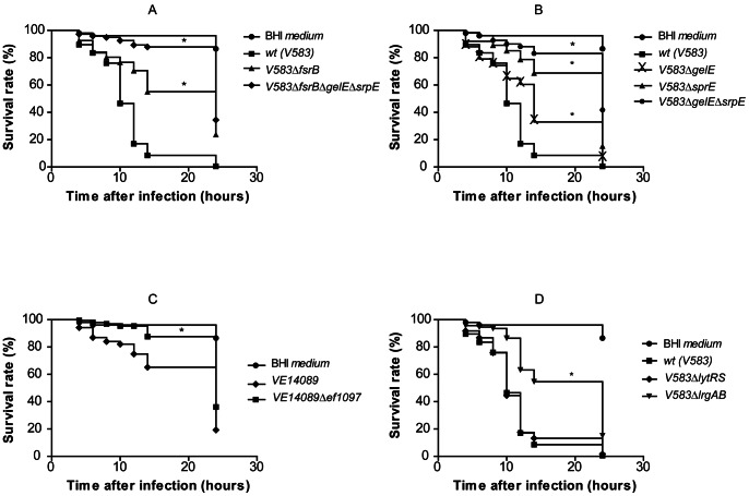Drosophila survival rates upon infection with E. faecalis strains. 75 Oregon R (5- to 7-day-old) male adult flies, raised at 25°C, were divided in tubes of 25 flies each, and infected, by septic injury onto the thorax with a thin needle, with V583 (A, B, D) and VE14089 derived strains (C). Data is representative of three independent experiments (225 flies per strain). Curves assigned with an * are significantly different (p