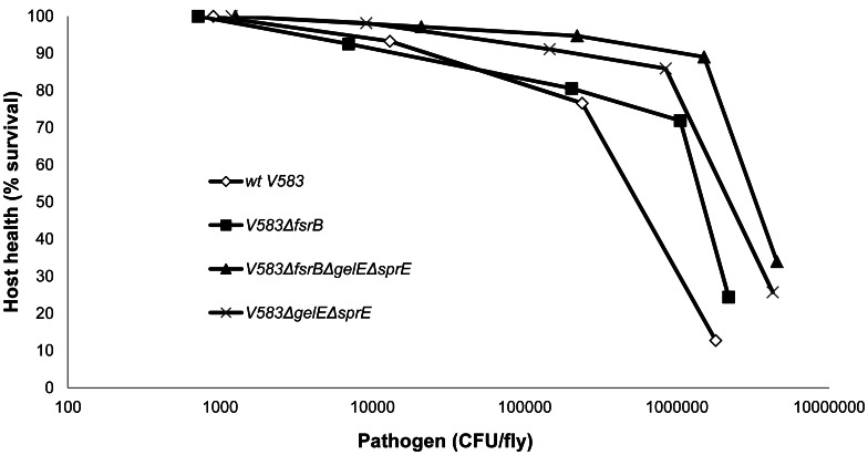 Drosophila -health by E. <t>faecalis</t> -load curve. Source data used to construct this figure was obtained from results on Figure 2 , only considering time points at which enough flies alive were available. All strains show two different slopes corresponding to different tolerance values, revealing that at some point (pathogen load value) there is a huge decrease in tolerance to E. faecalis . This inflection point corresponds to a lower pathogen load for the wild type strain (10 5 ), when compared to the mutant strains (10 6 ). For 10 6 value of pathogen load, the wild type induced only 10% survival in the Drosophila population, as opposed to 90% survival of the Drosophila population infected with the triple mutant.
