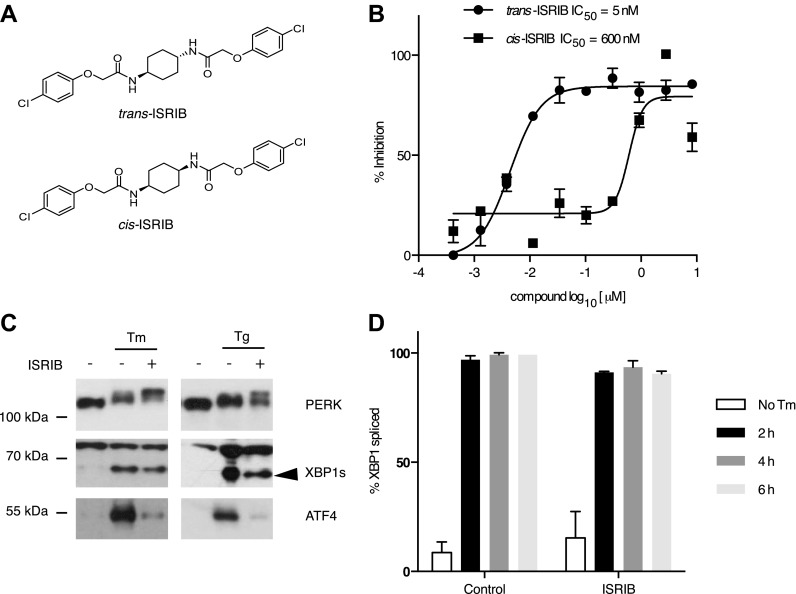Identification of ISRIB as a potent cell-based inhibitor of PERK signaling. ( A ) Structures of ISRIB isosteromers. ( B ) Inhibition of the ATF4 luciferase reporter in HEK293T cells by ISRIB stereoisomers. Inhibition is plotted in relation to the concentration of either the cis or trans isomer of ISRIB. Cells were treated with 2 µg/ml of tunicamycin to induce ER stress and different concentrations of the inhibitors for 7 hr (N = 2, mean ± SD). ( C ) Effect of ISRIB on production of endogenous ATF4, PERK phosphorylation, and XBP1s production. An immunoblot analysis of PERK, ATF4 and XBP1s in HEK293T cells treated with different ER stress inducers (2.5 µg/ml tunicamycin [Tm] or 100 nM thapsigargin [Tg]) with or without 200 nM ISRIB for 3 hr is shown. The arrowhead marks the XBP1s specific band. ( D ) Effect of ISRIB on XBP1 mRNA splicing. Taqman assays for XBP1unspliced (XBP1u) and XBP1spliced (XBP1s) on cDNA synthesized from total RNA extracted from U2OS cells treated with 2 µg/ml of tunicamycin in the presence or absence of 200 nM ISRIB for the indicated times are shown. Percent splicing was calculated as the ratio of XBP1s over total XBP1 mRNA (XBP1u + XBP1s) (mean ± SD). DOI: http://dx.doi.org/10.7554/eLife.00498.004