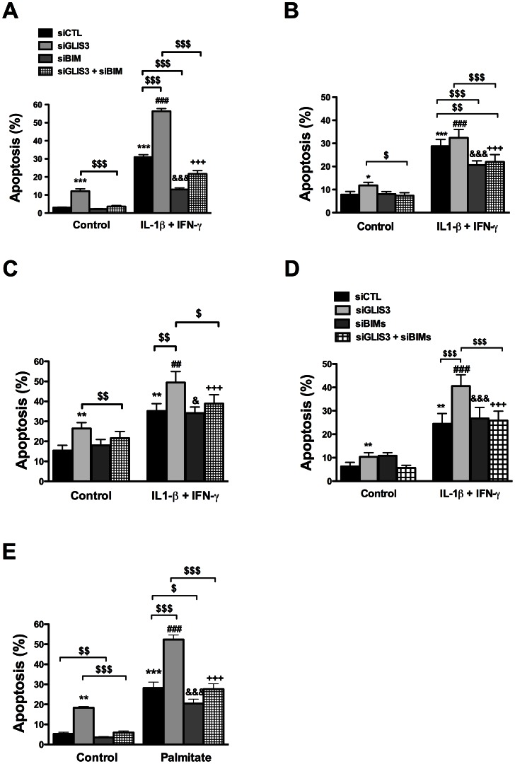 Bim mediates the potentiation of apoptosis in GLIS3- deficient cells. INS-1E cells (A, D and E), primary rat beta cells (B) and human dispersed islet cells (C) transfected with control or GLIS3 siRNAs were exposed to cytokines (A, B, C and D) or palmitate (E) for 24 h. (A, B, C and E) cells transfected with Bim siRNA (siBim); (D) cells transfected with a second Bim siRNA affecting preferentially Bim S (siBim S ). Apoptosis was then measured using nuclear dyes. Results are means ± SEM (n = 4–11). * P