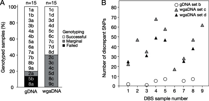"""Success and accuracy of genotyping with genomic or amplified DNA from dried blood spots. Genomic DNA (gDNA) extracted from two 2 mm punches obtained from archived dried blood spots (DBS) from nine individuals (1–9) was genotyped on an Illumina Infinium 300,000 SNP test chip (set """"a"""", 1a–9a). For six of the DBS (1,3,4,5,7,8), a set (set """"b"""") of extraction duplicates (duplicate extractions from the same DBS) was prepared and genotyped in the same way. A 1 µl aliquot of each of these 15 samples of gDNA was whole genome amplified (wgaDNA) and then genotyped in the same way as sets """"a"""" and """"b"""": set """"c"""" wgaDNA samples (1c–9c) were amplified from set """"a"""" gDNA samples, and set """"d"""" wgaDNA samples (1d, 3d, 4d, 5d, 7d, 8d) were amplified from set """"b"""" gDNA samples. (A) Performance quality of the gDNA and wgaDNA samples on genome-wide SNP genotyping. Successful, Marginal, and Failed sample performance parameters are given in Results. (B) SNP genotyping replication error. The number of SNP discrepancies for each sample was determined using gDNA set """"a"""" as the reference. Replication error (the number of discrepancies among SNPs called in both the sample and reference divided by the total number of SNPs called in both) was 1.6×10 −5 for set """"b"""", 1.5×10 −4 for set """"c"""", and 1.2×10 −4 for set """"d"""". These replication error values are provisional because we do not know the true genotype of the discrepant loci and there may be gDNA-specific and/or wgaDNA-specific artifacts."""