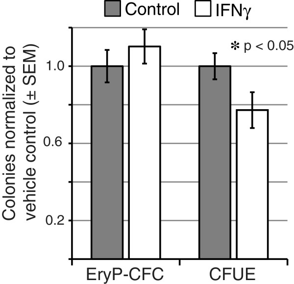 IFNγ differentially modulates definitive erythroid colony formation. Erythroid progenitor assays were performed on single-cell suspensions of dissociated murine E8.5 embryos (EryP-CFC) and adult bone marrow (CFU-E) in the presence or absence of IFNγ (10 ng/ml). CFU-E and EryP-CFC colonies were identified by morphologic criteria and scored at 2–3 and 5 days, respectively. Values for IFN-treated cultures are presented as normalized to vehicle-treated (phosphate buffer) control cultures.