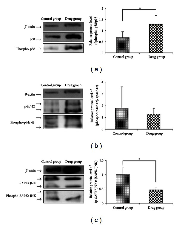 The MAPK signal transduction pathway is regulated by FUZHENGHUAYU Tablet. Protein levels of rat p44/42 MAP kinase (137F5), <t>SAPK/JNK</t> (56G8), p38 MAP kinase, phospho-p44/42 MAPK (Thr202/Tyr204), phospho-p38 MAPK (Thr180/Tyr182), and phospho-SAPK/JNK (Thr183/Tyr185) were detected by Western blot.