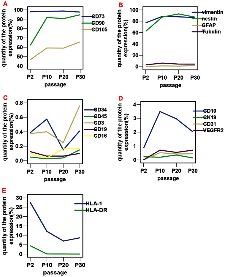 Flow cytometry analysis of cell marker expression over time in culture. Flow cytometry plots for various markers at P2, P10, P20, and P30. (A): CD73 was always highly expressed at P2, P10, P20, and P30; CD90 was moderately expressed at P2, and highly expressed at P10, P20, and P30; CD105 was moderately expressed at P2, P10, P20 and P30. (B): Substantial vimentin expression was observed at P2, P10, P20, and P30. Nestin expression mirrored CD90 expression. Ne stin expression was moderate at P2 but high at P10, P20, and P30, whereas GFAP and β-III tubulin showed minimal expression throughout the culture period. (C): Human EMSCPCs expressed very low levels of CD34, CD45, CD3, CD19 and CD16. (D): CD10 expression was always low, while CK19, CD31, and VEGF R2 were barely detectable. (E): The tissue compatibility antigens HLA-DR and HLA-I were moderately or minimally expressed at P2; with increasing number of passages, fewer and fewer cells expressed these markers. No HLA-DR-positive cells were detected in some specimens at P10, P20, and P30.