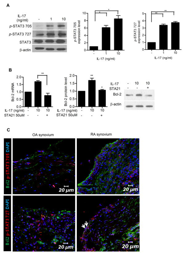 Signal tranducer and activator of transcription 3 ( STAT3) mediates IL-17-induced Bcl-2 upregulation in synoviocytes in rheumatoid arthritis (RA) . ( A ) IL-17 upregulated the expression of STAT3 in RA-fibroblast-like synoviocytes (FLSs). RA-FLSs ( n = 3) were cultured with IL-17 (0, 1 and 10 ng/ml) for 12 hours. The expressions of STAT3 and phosphorylated STAT3 (pSTAT3 705 and pSTAT3 727) were measured by western blot. The representative figure is shown in the left panel. Data are expressed as mean ± SD of three independent experiments. * P