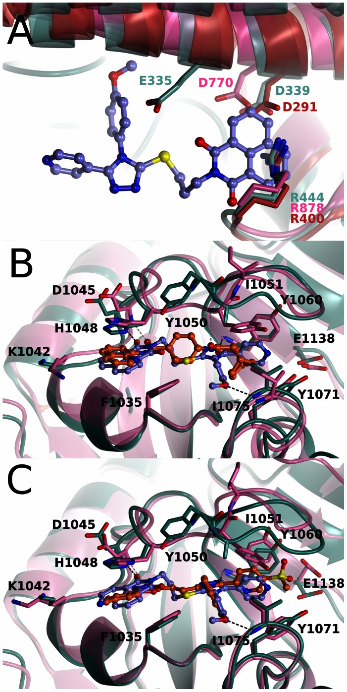 Comparison of WIKI4 binding to tankyrase 2 with other tankyrase selective inhibitors and with ARTD1-3 structures. WIKI4 - TNKS2 protein structure is colored in turquoise and WIKI4 is colored in lilac. a) Comparison of the WIKI4 binding sites in TNKS2, ARTD1 (pink) (pdb accession code 3GJW), ARTD2 (green) (pdb accession code 3KCZ), and ARTD3 (red) (pdb accession code 3FHB). ARD, ARTD regulatory domain. b) Comparison of the binding of WIKI4 and IWR-1. Hydrogen bonds for WIKI4 and IWR-1 are shown in black and gray dotted lines, respectively. IWR-1 - TNKS2 protein structure is colored in pink and IWR-1 is colored in orange. c) Comparison of the binding of WIKI4 and G007-LK. Hydrogen bonds for WIKI4 and G007-LK are shown in black and gray dotted lines, respectively. G007-LK - TNKS2 protein structure is colored in pink and G007-LK is colored in orange.