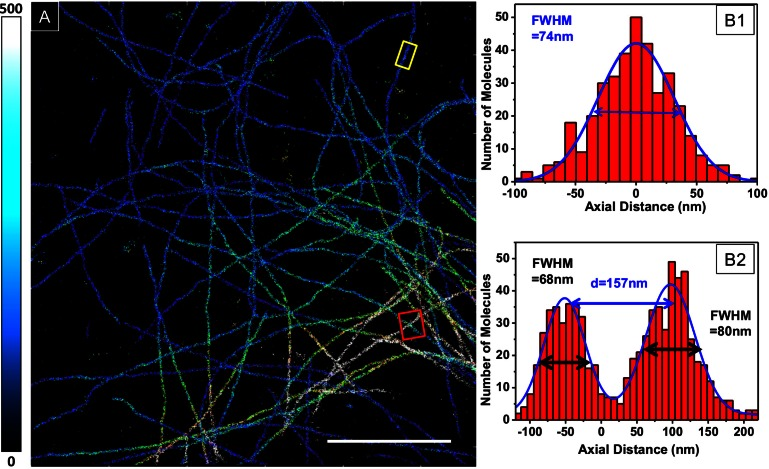 3D STORM of Alexa-647-labeled microtubules in Vectashield: (A) Imaging performed in 25% Vectashield-75 % TRIS-Glycerol, scale-bar = 5 μ m. (B1 2): axial profile taken from the two regions delimited in A (yellow for (B1), showing a single microtubule; red for (B2) showing two well-resolved microtubules crossing at a distance of ≈ 160 nm).