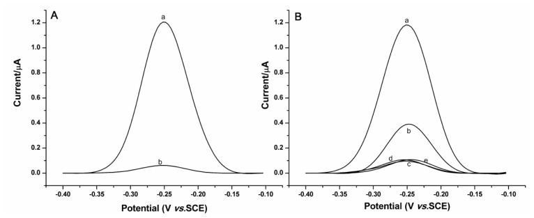 Square wave voltammograms obtained at the gold electrode immobilized with the DNA strands. ( A ) In the absence of ER, (a) before, and (b) after the DNA strands are digested by <t>Exo</t> <t>III;</t> ( B ) In the presence of 100 nM ER, (a) before, and (b) after the DNA strands are digested by Exo III. Curves c–e are for the control experiments by using 500 nM bovine serum albumin (BSA), thrombin and α-fetoprotein (AFP) instead of 100 nM ER. Buffer: 10 mM phosphate-buffered saline (PBS) buffer (PH 7.4).