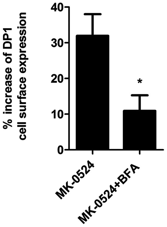 """The promotion of DP1 cell surface targeting by MK-0524 is inhibited by Brefeldin A. Cell surface receptor expression was measured by ELISA as described under """" Materials and Methods """" in HEK293 cells transiently expressing Flag-DP1 that were pre-incubated with vehicle or 20 µM of Brefeldin A (BFA) for 30 min, and then treated with 1 µM of MK-0524 or its control vehicle for 90 min. The results are shown as the percentage increase of DP1 cell surface expression when compared to control cells treated with vehicle. Results are the mean ± S.E. of three independent experiments. * is P"""