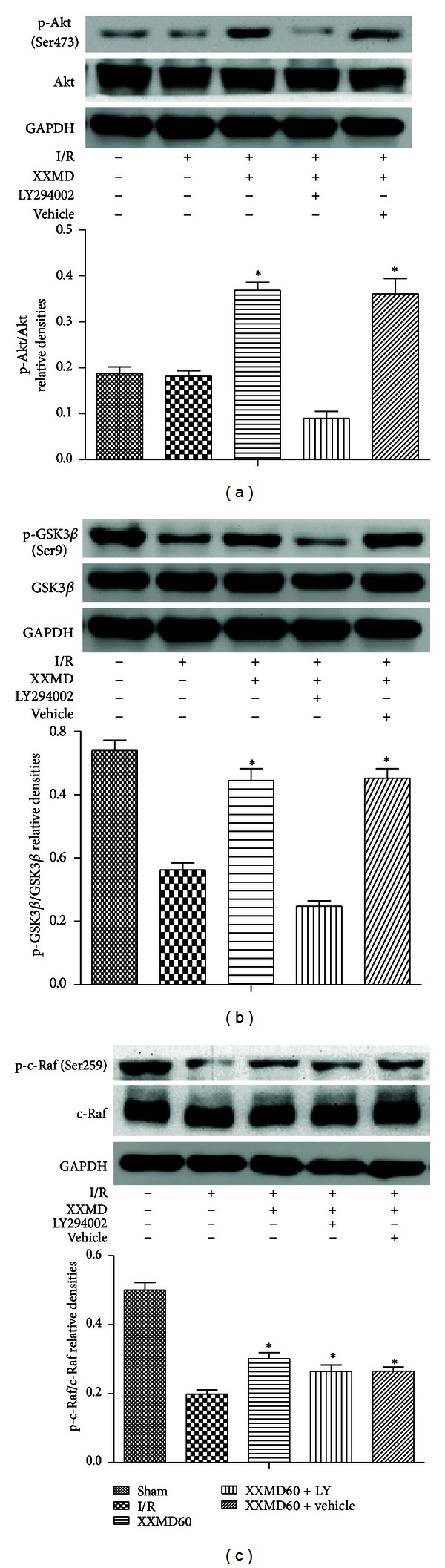 Western blot analysis of phosphorylation levels of Akt, GSK3 β , and c-Raf at 24 h after reperfusion. (a) Representative protein bands for p-Akt (Ser473), total Akt. p-Akt (Ser473) expression levels significantly were decreased at 24 h after reperfusion, whereas XXMD treatment enhanced p-Akt (Ser473) levels and the effects could be partly reversed by PI3K inhibitor. No changes in Akt were detected in rats of different groups. GAPDH was used to show equal protein loading of each lane. (b) Representative protein bands for p-GSK3 β (Ser9), total GSK3 β . A decrease in p-GSK3 β (Ser9) level was observed in the peripheral area of ischemia after reperfusion and the levels of p-GSK3 β (Ser9) in the XXMD60 group were higher than those in the I/R group. However, inhibition of PI3K using LY294002 abolished the increase. No changes in GSK3 β were observed in rats of different groups. (c) Representative protein bands for p-c-Raf, total c-Raf. Although p-c-Raf expression levels significantly were decreased at 24 h after reperfusion, XXMD preserved the levels of p-c-Raf. Notably, LY294002 did not significantly block the effect of XXMD on p-c-Raf. No changes in c-Raf were detected in rats of different groups. Data are reported as the means ± SEM. n = 5; * P