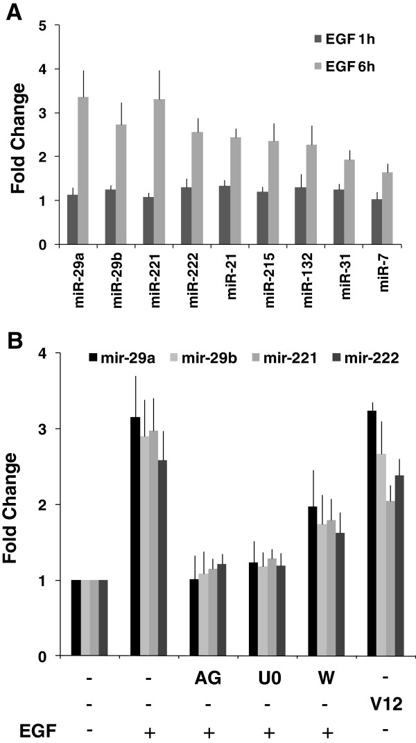 RT-qPCR validation of EGF-regulated miRNAs. Total RNA prepared from cells lysates were analyzed by quantitative real time PCR using the miRCURY LNA™ microRNA PCR System (Exiqon) for each of the miRNAs as indicated. A . Control treatment without inhibitors: HeLa cells were serum-starved for 24 hours and treated with EGF for 1 and 6 hours. B . Inhibitor treatment. HeLa cells were serum-starved for 24 hours and treated with EGF for 6 hours in the presence or absence of protein kinase inhibitors: AG1470 (EGFR inhibitor), U0126 (MEK inhibitor) and Wortmannin (PI3K inhibitor). In addition, HeLa cells were transfected with a constitutively active form of Ras (RasV12). Effective pathway inhibition was verified by western blotting in parallel samples from the same experiment (see Additional file 8 ).