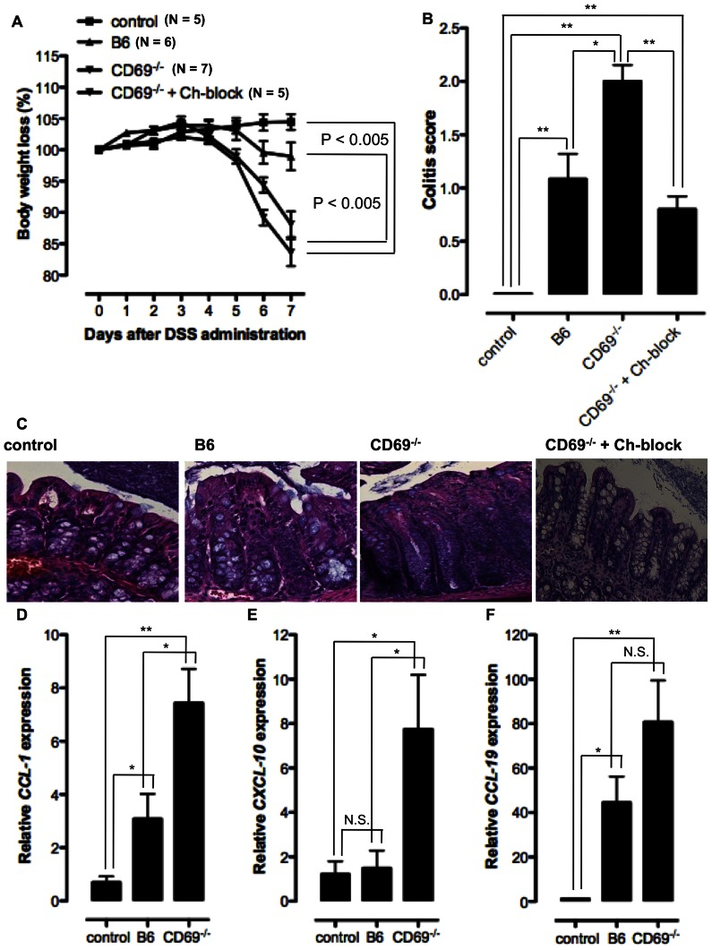 Increased susceptibility of CD69 −/− mice to DSS induced colitis is partially due to increased chemokine-dependent CD4 T cell migration to cLP. B6 or CD69 −/− mice are administrated 2% dextrane sodium sulphate (DSS) in the drinking water for 5 days and then provided with normal sterile water. One group of DSS-administrated CD69 −/− mice were treated with the mixture of CCL-1, CXCL-10 and CCL-19 blocking Abs by i.p. injection at days 0, 2, 4 and 6 (CD69 −/− +Ch-block group). The control group represents non-treated B6 animals. A. Mean (± SEM) of body weight loss (%) of at least 5 mice per group is shown. B. Colitis scores of the histological colon sections of DSS treated B6 and CD69 −/− mice, control and CD69 −/− +Ch-block groups. Mean (± SEM) for at least five mice per group are presented. C. Histopathological colon tissue samples taken from control B6 mice, DSS treated B6 or CD69 −/− animals and CD69 −/− +Ch-block group were embedded in paraffin, sectioned on a microtome, mounted on slides, and stained with H E. Representative images of one individual mouse per group (from at least five mice per group analyzed) are shown (original magnification×20). RNA was isolated from the frozen colon tissue samples of control B6 animals and DSS treated B6 or CD69 −/− mice and reverse transcribed to complementary DNA. Relative expression of CCL-1 ( D ), CXCL-10 ( E ) and CCL-19 ( F ) genes compared to β-actin gene is measured by qRT-PCR. Mean (± SEM) for at least five mice per group are presented. N.S. – not statistically significant; *p≤0.05; **p≤0.005.