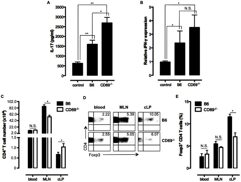 Severe colitis in DSS treated CD69 −/− mice is associated with increased pro-inflammatory response and early influx of <t>CD4</t> T cells devoid of Foxp3 Treg cell into the colon. A. IL-17 concentration was determined by ELISA in the sera of control B6 mice and DSS treated B6 and CD69 −/− mice 7 days after the DSS administration. Mean (± SEM) of at least five mice per group is presented. B. RNA was isolated from frozen colon tissue samples of B6 and CD69 −/− mice treated with DSS, seven days after the DSS administration, or the control B6 mice and reverse transcribed to cDNA. Relative expression of IFN-γ gene was measured by qRT-PCR and presented as mean ± SEM of at least five mice per group. C. Mean (± SEM) total number of CD4 + T cells in blood, mesenteric lymph nodes (MLN) and colonic lamina propria (cLP) of 3 days DSS treated B6 and CD69 −/− mice are shown. At least five mice per each strain were analysed. D. The expression of Foxp3 by CD4 T cells from blood, MLN and cLP of B6 and CD69 −/− mice treated with DSS for 3 days was analysed by flow cytometry. Data from an individual, representative mouse (out of at least 5 mice per group analysed) are shown. Numbers indicate the percentage of CD4 T cells that express the transcriptional factor Foxp3. E. Mean (± SEM) total number of CD4 + Foxp3 + T cells in blood, MLN and cLP of 3 days DSS treated B6 and CD69 −/− mice are shown. At least five mice per each strain were analyzed. N.S. – not statistically significant; *p≤0.05; **p≤0.005.