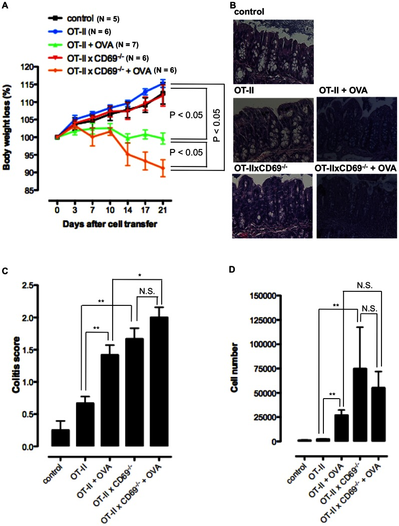 CD69-defficient OT-II CD4 T cells accumulate in cLP of RAG −/− hosts during an antigen specific transfer colitis. Antigen specific colitis was induced by the transfer of CD45RB high CD4 T cells, isolated from the spleen of OT-II or OT-II×CD69 −/− mice, into the RAG −/− animals. Cell transfer was in some groups followed by the intragastrical feeding of the hosts with 1 mg OVA protein every second day. A. Mean (± SEM) of body weight loss (%) of at least five mice per group is shown for non-treated RAG −/− animals (control group), hosts transferred with OT-II or OT-II×CD69 −/− cells and not fed with OVA (OT-II and OT-II×CD69 −/− groups) and host transferred with OT-II or OT-II×CD69 −/− cells and fed with OVA (OT-II+OVA and OT-II×CD69 −/− +OVA groups). B. Histopathological colon tissue samples taken from the control, OT-II, OT-II×CD69 −/− , OT-II+OVA and OT-II×CD69 −/− +OVA groups were embedded in paraffin, sectioned on a microtome, mounted on slides, and stained with H E. Representative images of one individual mouse from at least five mice per group analysed are shown (original magnification×20). C. Colitis scores of the histological colon sections of control animals and cell transferred hosts. Mean (± SEM) for at least five mice per group are presented. D. Cells recovered from the colonic lamina propria of the control mice and cell transferred hosts were analysed for the number of CD4 + T cells by flow cytometry. Mean (± SEM) for at least five mice per group are presented. *p≤0.05; **p≤0.005; N.S. – not significant.