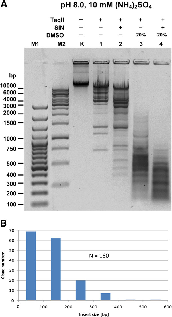 Cleavage of λ <t>DNA</t> (48,502 bp) under TaqII specificity changing conditions. ( A ) Complete TaqII cleavage pattern λ DNA under affinity star maximizing conditions (Methods). Samples of 1 μg λ DNA (=0.32 pmol recognition sites), digested under various conditions, were electrophoresed on 1% agarose/TBE gel. The <t>TaqII/SIN/DMSO</t> cleavage products were subsequently shotgun cloned to determine affinity star specificity (Methods). Lane M1, Fermentas 100 bp DNA Ladder (selected bands marked); lane M2, Fermentas 1 kb DNA Ladder (selected bands marked); Lane K, undigested λ DNA; lanes 1–4, λ DNA digested with TaqII: lane 1, without SIN and DMSO; lane 2, with SIN, no DMSO; lane 3, with 20% DMSO, no SIN; lane 4, with SIN and 20% DMSO. ( B ) Insert size distribution of 160 clones randomly selected from TaqII SIN/DMSO-generated λ DNA library in pUC19 vector (see Methods, Figures 2 , 3 and 6 ). The average insert size of the library was estimated to be 160 bp.