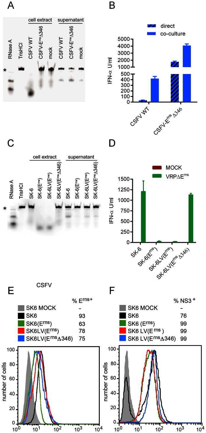 The RNase activity of E rns is required for its inhibitory function. A and C. Deletion of histidine 346 abolishes the RNase activity of the viral E rns in virus-infected cells (A) and in stable cell lines expressing the glycoprotein (C). Confluent monolayers of SK-6 cells infected for 24 h with CSFV vA187-1 (CSFV WT) or with the mutant vA187-E rns Δ346 virus (CSFV-E rns Δ346) (A), and of the cell lines SK-6, SK6(E rns ), SK-6LV(E rns ) and SK-6LV(E rns Δ346) (C) were washed 5 times with phosphate buffered saline and cultured for another 16 h in serum-free MEM. The culture supernatants were then collected and the cell extracts obtained by hypotonic lysis with H 2 O. The Dy-781-O1-RNA probe was incubated with MEM containing RNase A, with TrisHCl, and with cell extract or supernatant of cells infected with CSFV WT, CSFV-E rns Δ346 or mock (A) or of SK-6, SK6(E rns ), SK-6LV(E rns ) and SK-6LV(E rns Δ346) cells (C), and separated by urea/polyacrylamide gel electrophoresis. The star indicates the position of undigested RNA probe. B. CSFV with inactive RNase function of E rns (CSFV-E rns Δ346) is a better stimulator of pDC. Enriched pDC were activated by virus (hatched bars) or by co-culture with infected SK-6 cells. The IFN-α responses to wild type CSFV and CSFV-E rns Δ346 are compared. D to F. SK-6 cells expressing RNase active E rns prevent IFN-α induction by VRPΔE rns infection, while VRPΔE rns -infected SK-6 cells expressing E rns Δ346 re-gain their ability to stimulate pDC. SK-6 cells were transduced by lentiviral gene delivery to express wild type E rns or E rns Δ346 with 75% transduction efficiency (E). The SK-6(E rns ), and the LV-transduced SK-6LV(E rns ) and SK-6LV(E rns Δ346) were infected with VRPΔE rns and then tested for their ability to induced IFN-α in enriched pDC (D). The mean values of three replicates with standard deviations are shown calculated from data which is representative of three independent experiments. All E rns expressing cells lines were 