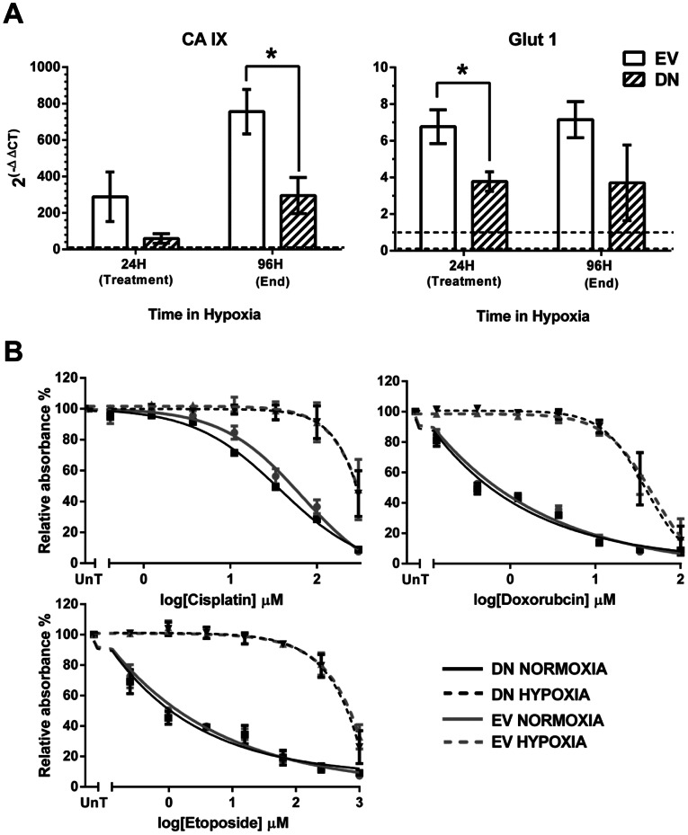 Osteosarcoma cells treated with the small molecule inhibitor of HIF-1α NSC134754 remain resistant in hypoxia. A, U2OS cells were treated with 20 µM NSC-134754 for 24 hours in hypoxia prior to exposure to a range of concentrations of cisplatin (0–300 µM), doxorubicin (0–100 µM) or etoposide (0–4000 µM) for 1 hour. Untreated controls were exposed to the same concentration ranges of cisplatin, doxorubicin and etoposide in normoxia and hypoxia. 72 hours after treatment cells were fixed and a SRB assay performed Graphs show the mean absorbance relative to the untreated controls (no chemotherapy agent) and are the average of 3 independent experiments ± SEM. B, Simultaneously plated cells treated with NSC134754 and incubated in hypoxia for 24 hours (time of treatment) or 96 hours (end of experiment) were harvested for whole cell lysates and western blotting performed for HIF-1α and CA IX. Western blots are representative 3 independent experiments with GAPDH used as a loading control. The difference between the response to cytotoxics in normoxia and hypoxia remains highly significant despite treatment with NSC134754 (p