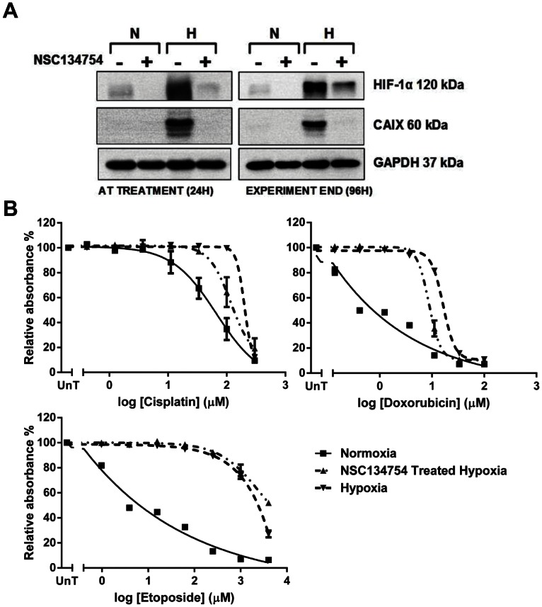 Cobalt Chloride stabilises and transcriptionally activates HIF-1α in normoxia but does not induce resistance. B, 24 hours after plating osteosarcoma cells were treated with cobalt chloride (791T 50 µM; HOS 25 µM; U2OS 25 µM) for 24 hours before treatment with a range of concentrations of cisplatin (791T 0–50 µM; HOS 0–25 µM; U2OS 0–200 µM), doxorubicin (791T 0–16 µM; HOS 0–5 µM; U2OS 0–40 µM) or etoposide (791T 0–50 µM; HOS 0–50 µM; U2OS 0–1000 µM). Following a one hour drug exposure cells were incubated with or without cobalt chloride for a further 72 hours before fixing and performing a sulphorhodamine-B assay. Graphs show the mean absorbance relative to the untreated controls (UnT) against the log of the drug concentrations and are the average of 3 independent experiments ± SEM. A, Whole cell lysates of cells treated with the above doses of cobalt chloride for the length of the experiment (96 hours) were harvested for western blotting to determine HIF-1α stabilisation and expression of downstream target CA IX. The western blots are representative of 3 independent experiments with GAPDH as a loading control.