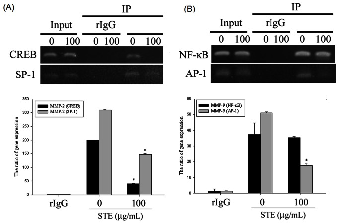 Critical role of transcription factor in STE-induced transcriptional inhibition of MMP-2 and MMP-9 in HSC-3 cells.