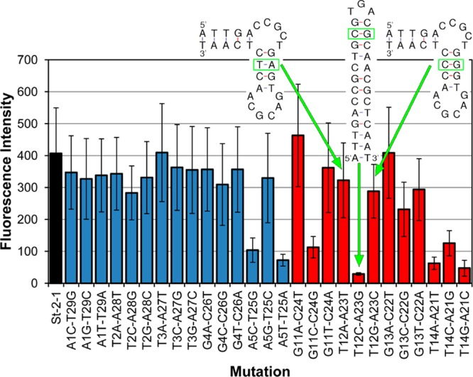 Effect of base pair replacements in the double-stranded parts of St-2-1. Binding was tested using an on-array streptavidin binding assay. Black bar, St-2-1; blue bars, mutation in the terminal stem; red bars, mutation in the sequence between the bulges. Error bars are based on 12 replicates on the array. Secondary structure of the variants A 12 T 23 , G 12 C 23 , and C 12 G 23 . The structural variant C 12 G 23 correlates with reduced streptavidin binding on-array.