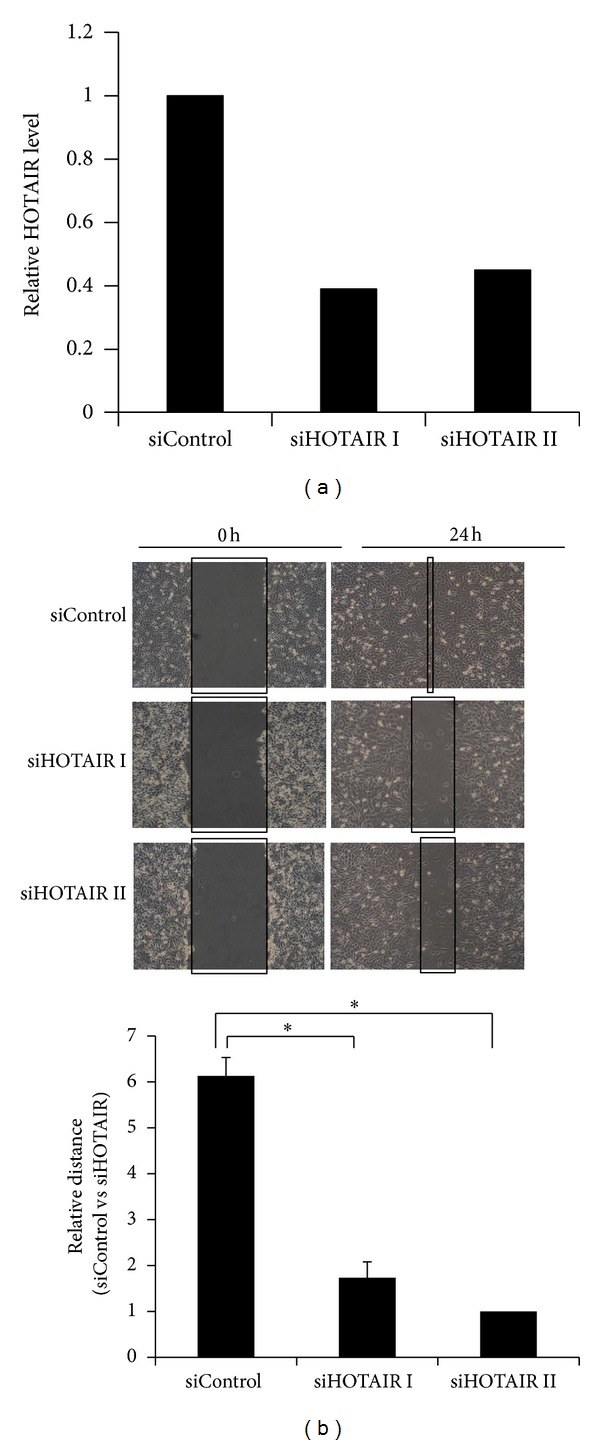 Knockdown of HOTAIR decreases melanoma A375 cell motility. (a) qRT-PCR analysis was performed to examine HOTAIR RNA levels in A375 cells transfected with siControl, siHOTAIR I, or siHOTAIR II. (b) Wounds were introduced by scratching confluent monolayers of A375 cells transfected with siControl, siHOTAIR I, or siHOTAIR II. Migration was monitored by light microscopy at 0 hours and 24 hours (upper panel). The widths of the gaps from 3 experiments were measured and the results are presented in a bar graph (lower panel). * P