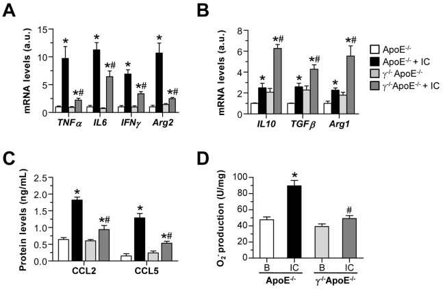 Responses of bone marrow-derived macrophages to FcγR stimulation. Bone marrow-derived macrophages from ApoE −/− and γ −/− ApoE −/− mice were stimulated with soluble IC (75 µg/mL). Real-time PCR analysis of M1 ( A ) and M2 ( B ) response genes at 6 h of stimulation. Expression data are normalized to control ApoE −/− values ( = 1) and displayed as arbitrary units (a.u.). ( C ) Chemokine production in supernatants was detected by ELISA. ( D ) NADPH oxidase-dependent superoxide anion production (lucigenin assay) at 1 h of stimulation. Values are expressed as chemiluminescence units per mg of cell protein. Data represent the mean±SEM of 4–6 independent experiments.* P