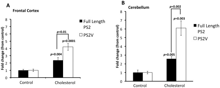 PS2V is up-regulated under cholesterol-fed conditions. Quantitative PCR analysis shows that, in comparison to animals fed a control diet, guinea pigs fed a cholesterol rich diet showed a significant increase in PSEN2 and PS2V transcripts in ( A ) frontal cortex ( p = 0.004; t = 3.429, d.f. = 14 and p