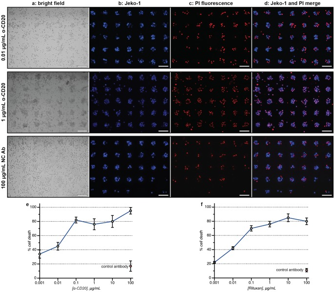 Cell-array ADCC assays. The scale bar in each image represents 100 µm. (a) The bright field images show a mixture of indistinguishable targeted cells and effector cells (PBMCs) after 16 h. (b) The Jeko-1 target cells were prestained with a Cell Tracker dye, allowing their facile detection using fluorescence microscopy. (c) The dead cells were stained red using PI and counted using Image-J software or manually. (d) A merged image allows the ratio of living (blue) to dead (purple) targeted cells to be determined. Red cells with no overlapping blue stain indicated dead effector cells, which were not counted. Cellular microarray ADCC results are shown for the dose-dependent killing of (e) Jeko-1 cells and (f) primary B-chronic lymphobatic leukemia cells with α-CD20 after 16 h. The error bars indicate the standard deviation of three replicate experiments.