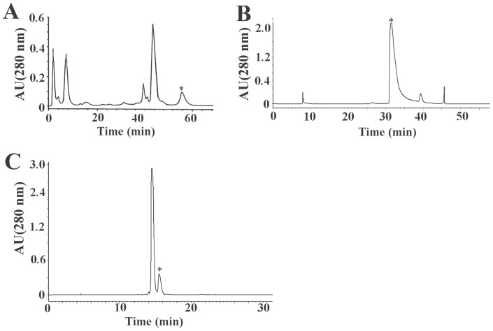 HPLC purification of mHWTX-IV. The peaks marked by * contain mHWTX-IV. (A) Elution profile of Ornithoctonus huwena Wang venom by ion-exchange HPLC. (B) Isolation of mHWTX-IV by RP-HPLC on a C18 column in a gradient of 10–50% acetonitrile over 50 min. (C) Further purification of mHWTX-IV by a repetitive RP-HPLC with a gradient of 28–40% acetonitrile over 30 min.