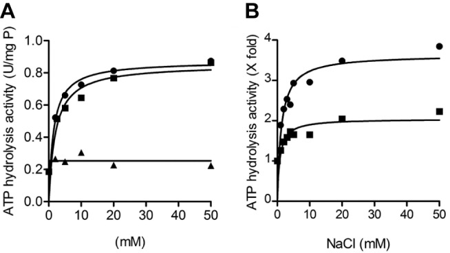 Catalytic activity of the purified F 1 F o -ATP synthase from F. nucleatum . (A) Activation of the F. nucleatum ATP synthase by Na + , Li + , and K + ions (Na + , •; Li + , ▪; and K + , ▴). (B) Activation of the ATP synthase by Na + ions at pH 7.5 (•) and pH 9.0 (▪). The ATP hydrolysis activity was determined using the ATP-regenerating assay (120–140 µg protein), at 37°C. Activity in units/mg of protein (1 unit = 1 µmol ATP hydrolysed/min). 100% of activity corresponds 1–2 units/mg at pH 7.5 and 0.6–0.72 units/mg at pH 9.0. The assay mixture contained 50 mM MOPS, 2 mM MgCl 2 (pH 7.5) in (A) and 50 mM MES-MOPS-Tris, 2 mM MgCl 2 in (B). The values plotted are representative of at least two biological replicates; the statistical variance was less than 20%.