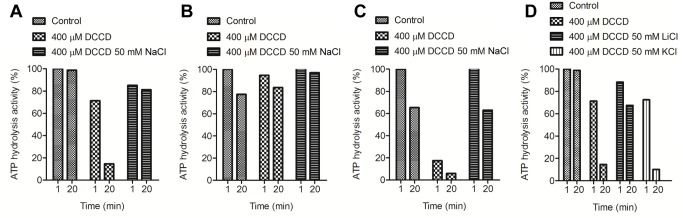 Protective effect of Na + and Li + against DCCD inhibition of the purified F. nucleatum ATP synthase. The purified protein (120–140 µg) was incubated at 25°C for 20 min in the presence of either 400 µM DCCD or 400 µM DCCD and 50 mM NaCl in 50 mM MES-MOPS-Tris, 2 mM MgCl 2 , (A) at pH 7.5, (B) at pH 9, and (C) at pH 6.5. (D) NaCl was substituted by either LiCl or KCl in 50 mM MES-MOPS-Tris, 2 mM MgCl 2 , pH 7.5. 100% enzyme activity corresponds to 1–2 units/mg of protein. The values plotted are representative of at least two to three individual experiments; the statistical variance was less than 20%.