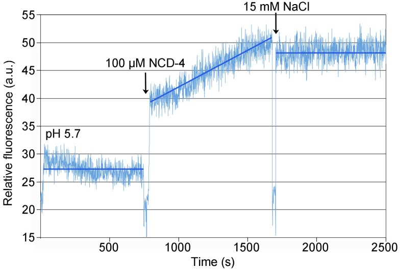 Kinetics of NCD-4 modification of detergent-solubilized c-rings from F. nucleatum . 100 µM NCD-4 was added to a sample of purified F. nucleatum c 11 ring in MES buffer (pH 5.7) and 1.5% (w/v) n-octyl-β-D-glycoside. A continuous increase in fluorescence was measured upon reaction of NCD-4 with Glu65. Addition of 15 mM NaCl precluded further increase in the fluorescence. An extended control measurement, with no NaCl added, is shown in Figure S12 .