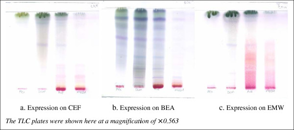 Expression fraction of Acetone extracts of A. uncinatus on TLC plates using three different expression methods. a-c are chromatograms of Hexane (Hex), Di-Chloro Methane (DCM), Acetone (Ace) and methanolic (MeOH) extracts respectively. CEF = Chloroform-Ethyl acetate-Formic acid; BEA = Benzene-Ethanol-Ammonia (BEA), and EMW = Ethyl acetate-methanol–water.